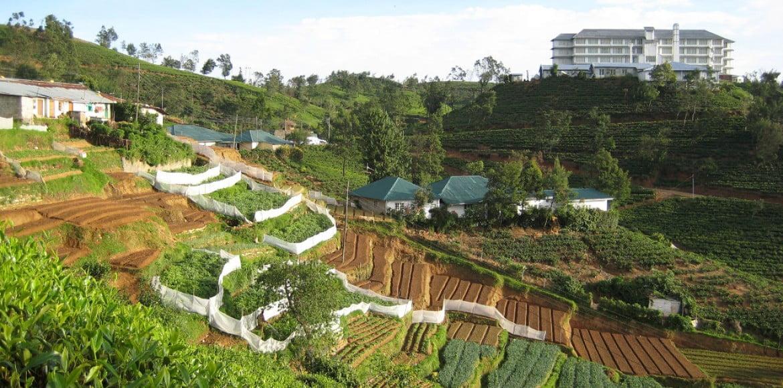 Plantations à Nuwara Eliya