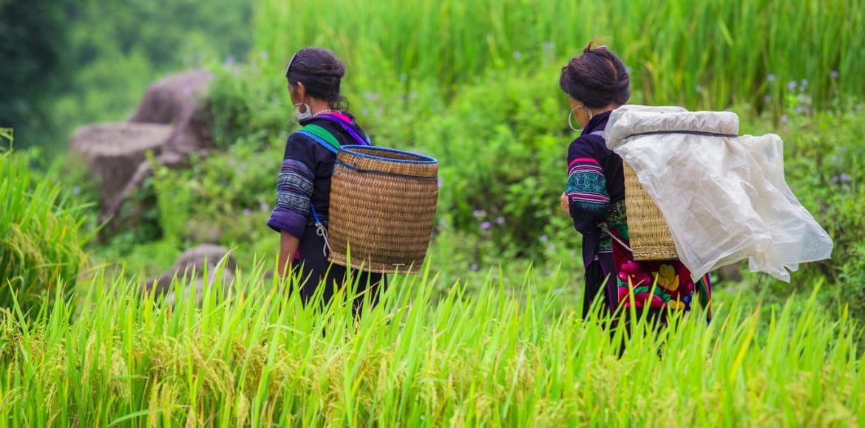 hilltripe on rice terraces